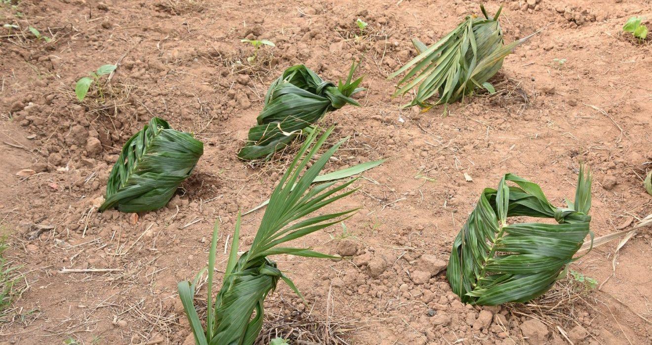 crops in liberia