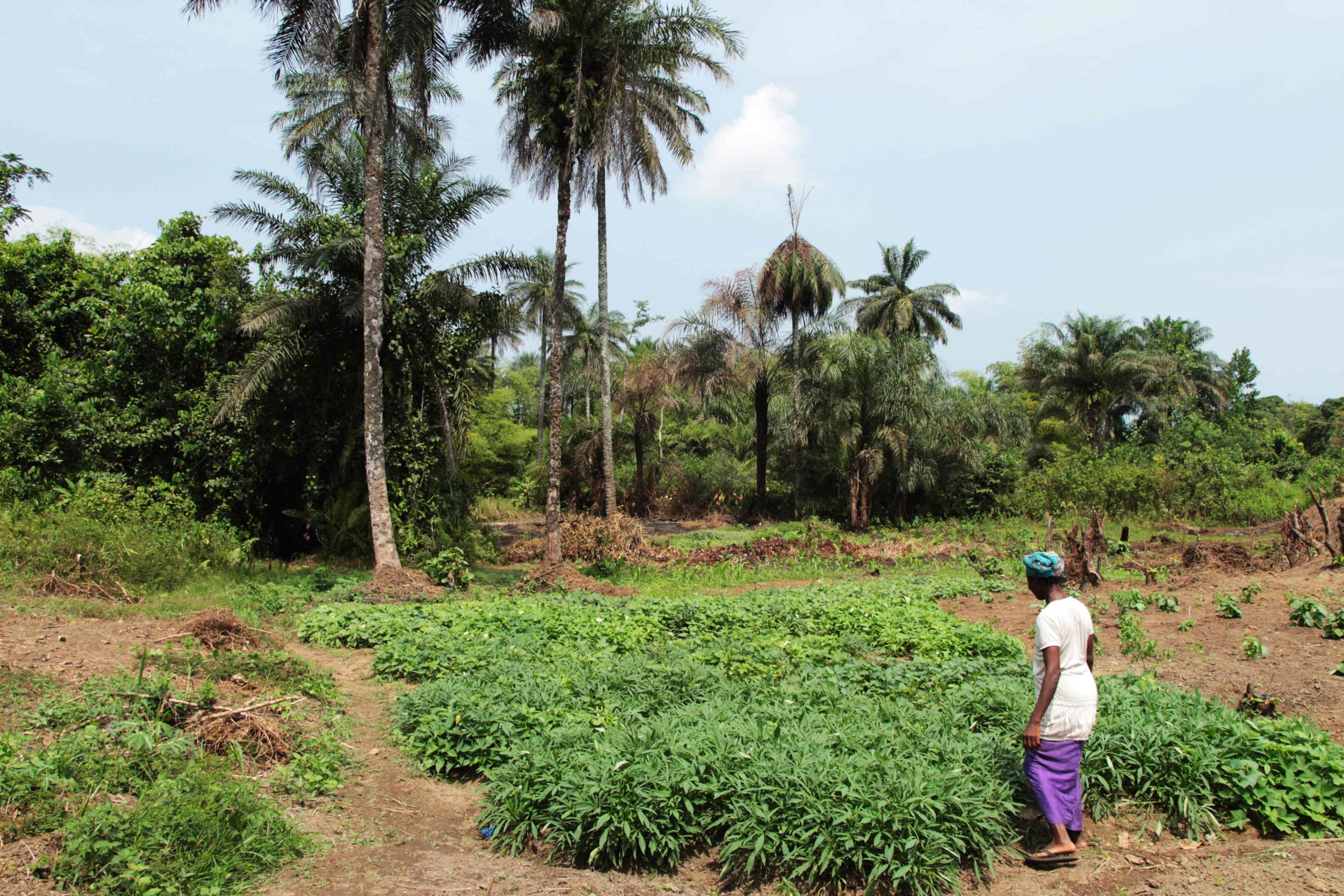 Farmer Fatu in her field in Liberia