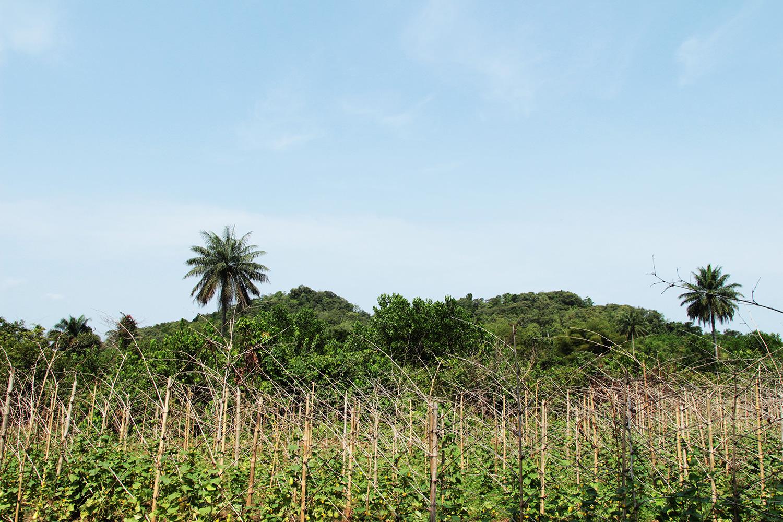 Photo of a climate-smart farm in Liberia